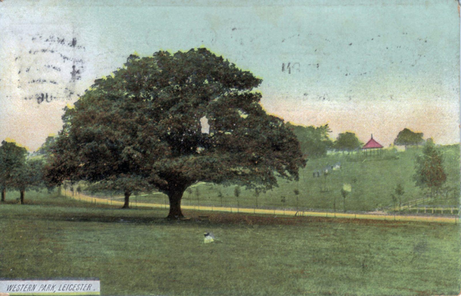 Western Park, Leicester. 1901-1920: Major Oak - an ancient oak tree. Bandstand in background. Franked 1913 (File:1086)