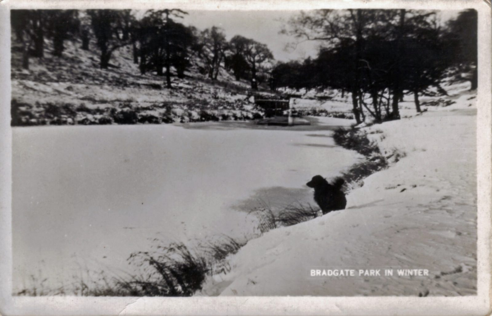 Bradgate Park, Leicester. Undated: The park in winter. Snow. Dog in foreground on riverbank. (File:1116)