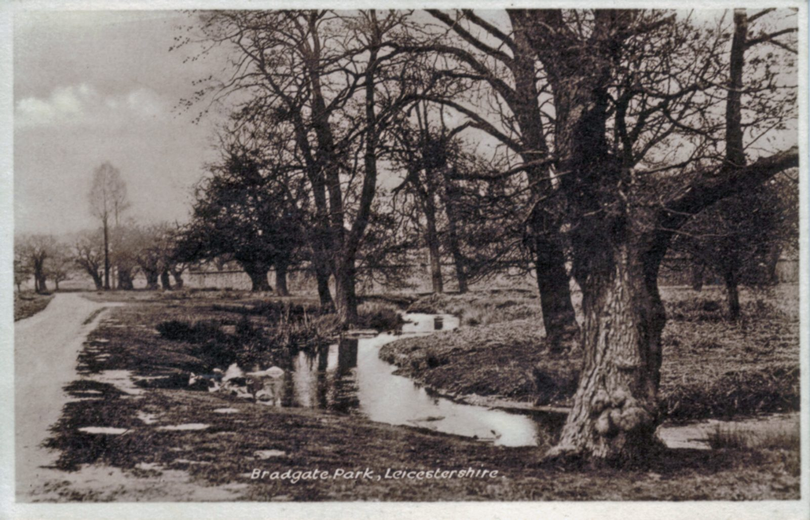 Bradgate Park, Leicester. Undated: The river and main path from Newtown Linford entrance. (File:1118)