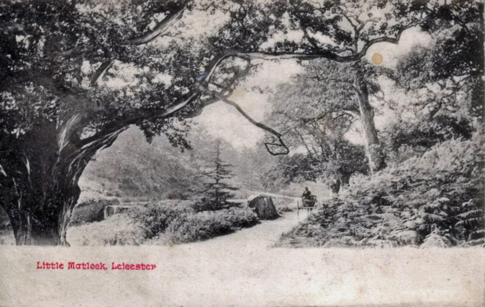 Bradgate Park, Leicester. 1901-1920: