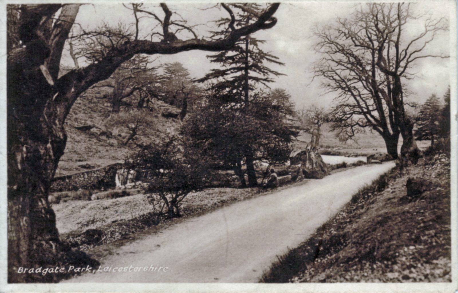 Bradgate Park, Leicester. Undated: The river and main path from Newtown Linford entrance. (File:1120)