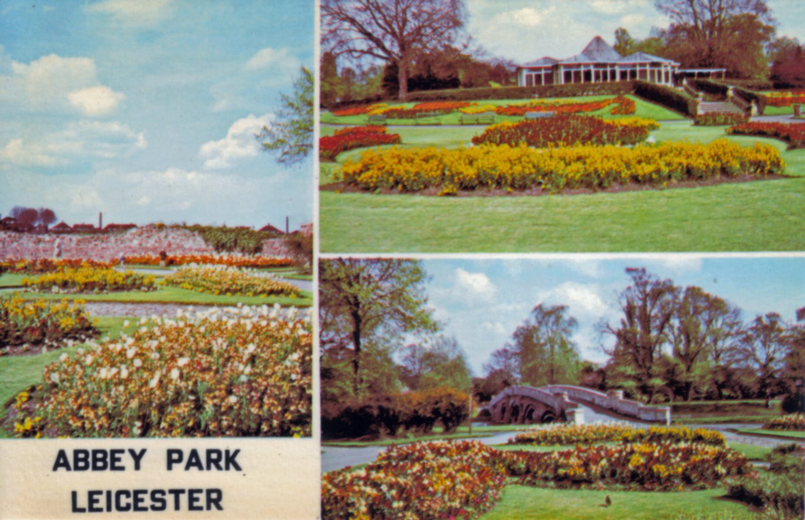 Abbey Park, Leicester. Undated: Three views including modern cafe, bridge and spring bedding. (File:1287)