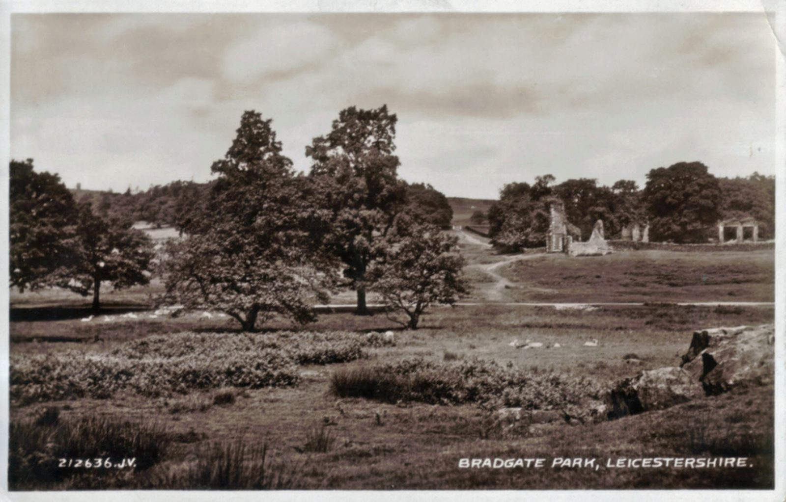 Bradgate Park, Leicester. 1921-1940: View of ruins. Posted 1936 (File:1311)