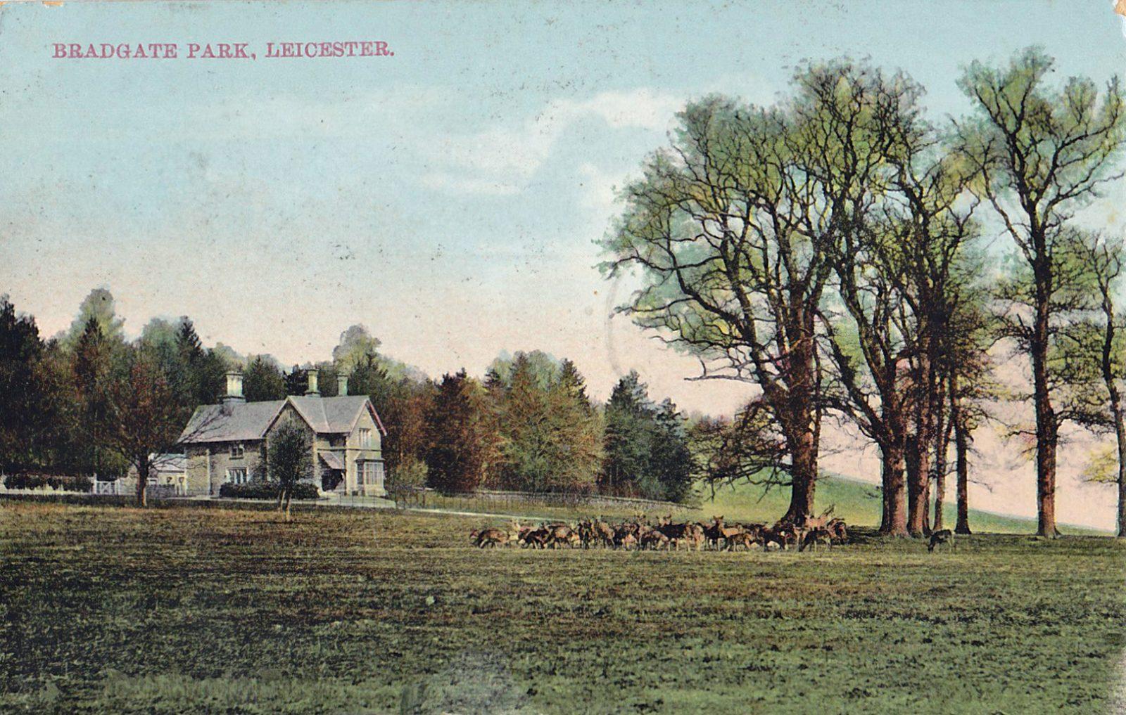 Bradgate Park, Leicester. 1901-1920: Park with deer. Franked 1911 (File:1499)