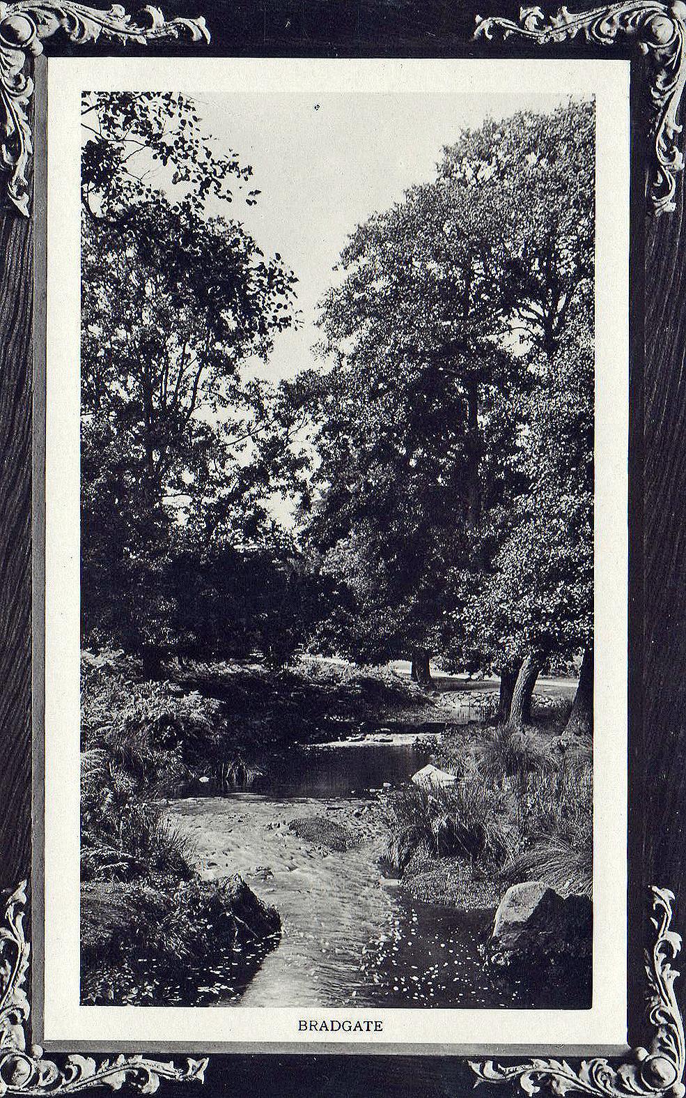 Bradgate Park, Leicester. Undated: The stream (File:1534)